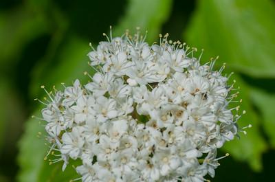 flowers-0892