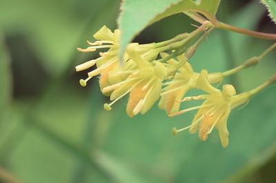 flower-1511