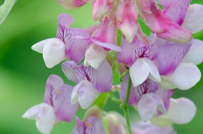 flower-1411