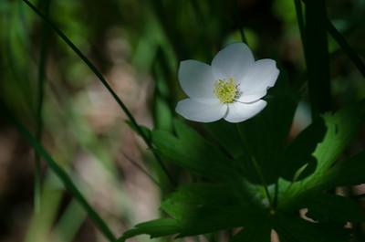 flowers-1042
