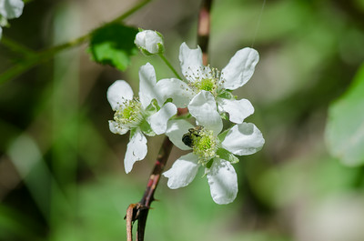 flowers-0951
