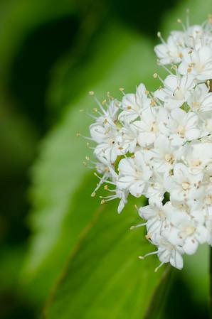 flowers-0890