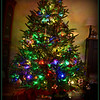 Tree_4056
