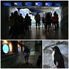 04_penguins 2
