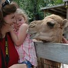 Juliana's camel encounter