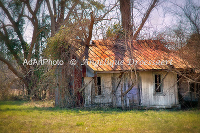 Off a Main Road on the Eastern Seaboard, Old Farm, NC