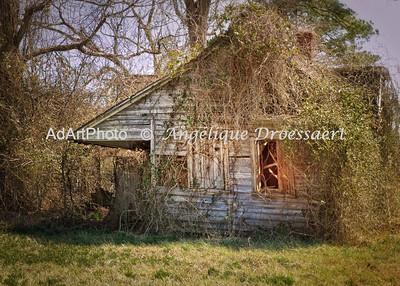 Eastern Seaboard: Overgrown Farmhouse, NC
