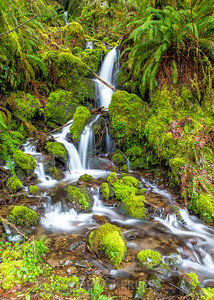 Cascading in the rain forest