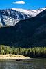 Moose  near Many Glacier in Glacier National Park - 2
