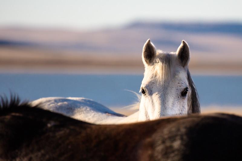 Peek-A-Boo Horse