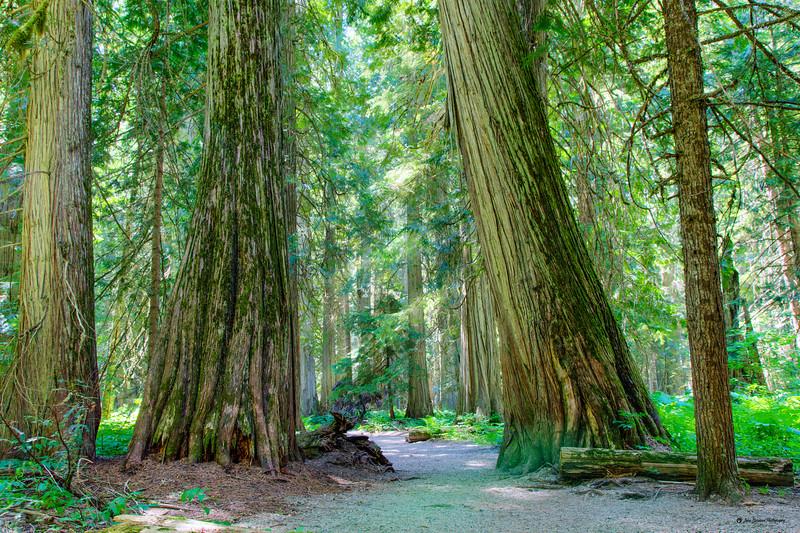 Ross Creek Cedars - Enchanted forest - Kootenai Forest