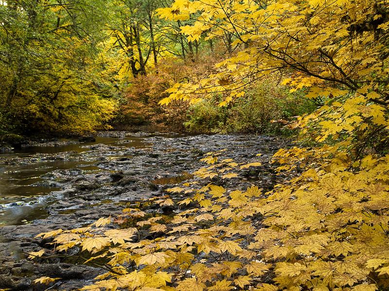 North Fork Silver Creek