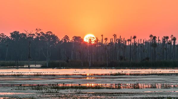 Sun rising over Orlando Wetlands