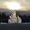 (2271) Frost Flower