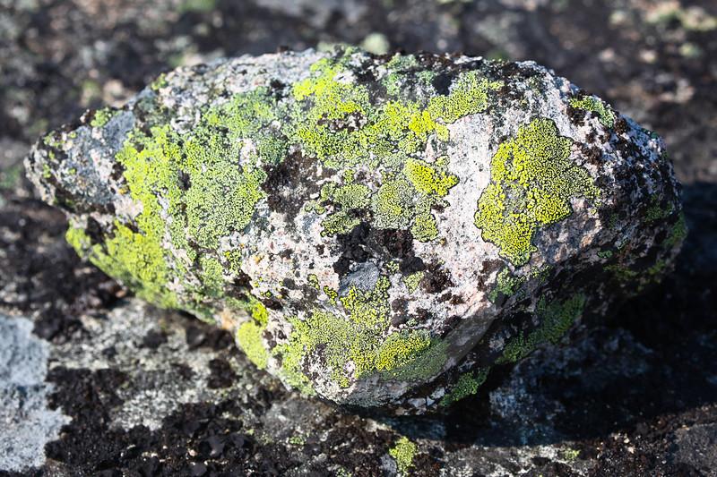 (670) Lichens in Nunavik