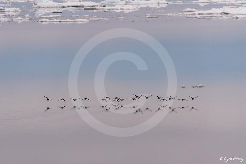 (2129) Baie d'Hudson