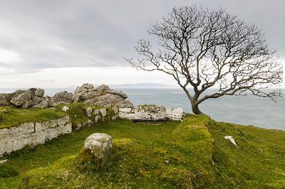The Murlough Bay's tree