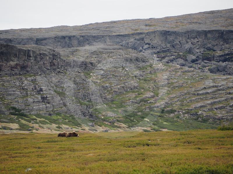 (2187) Landscape