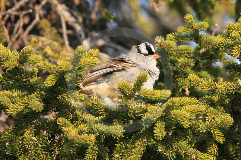 (671) Bird of Nunavik