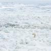 (2127) Baie d'Hudson