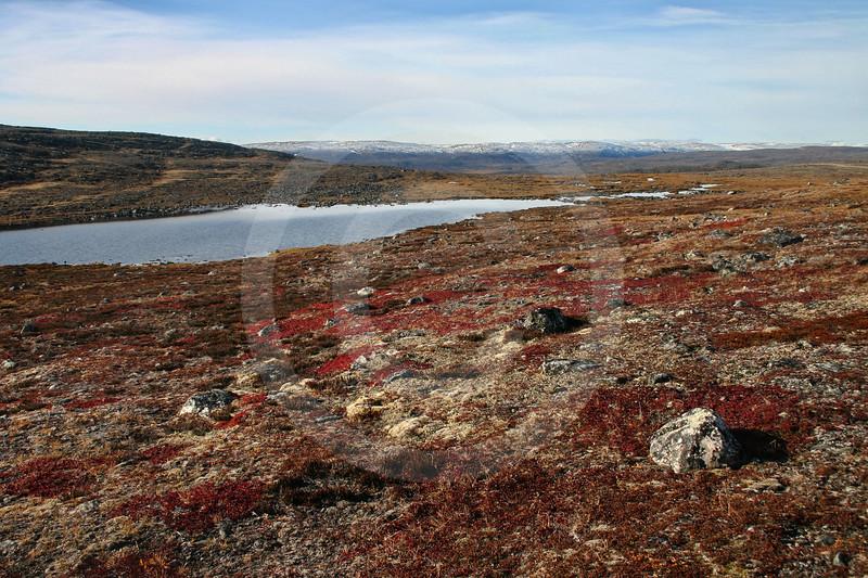 (159) Tundra