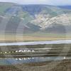 (312) Bylot Island Base Camp, Baffin Island, Nunavut