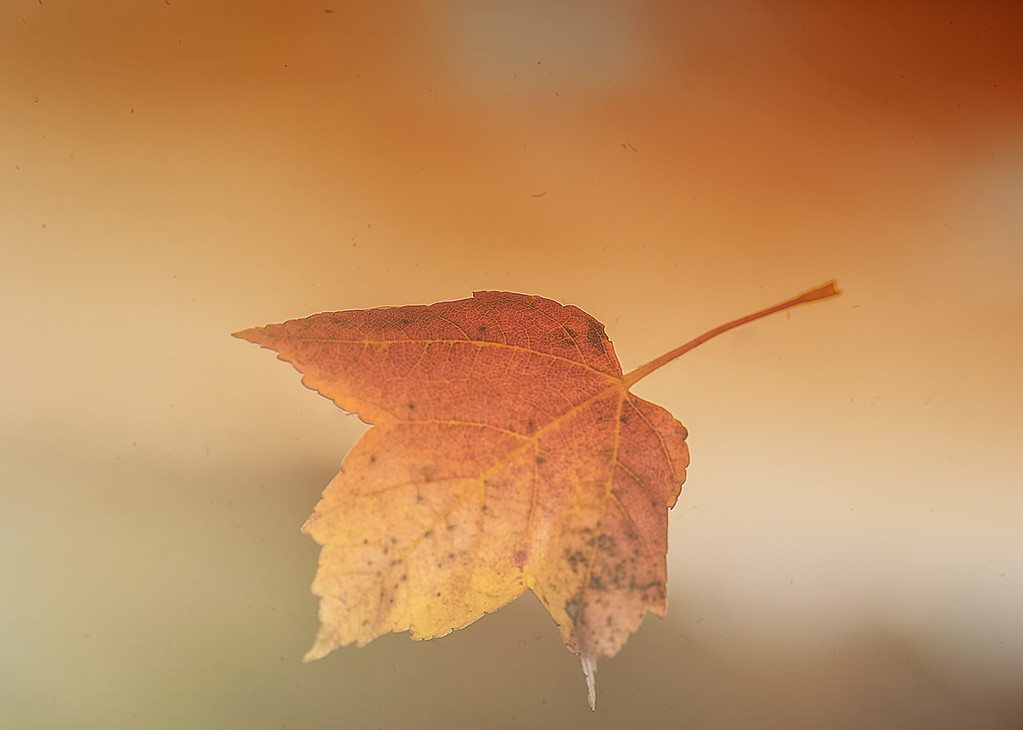 Leaf In The Wind