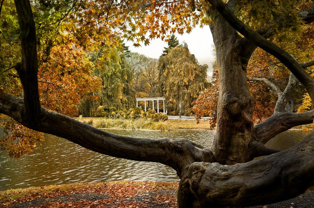 Autumn attraction