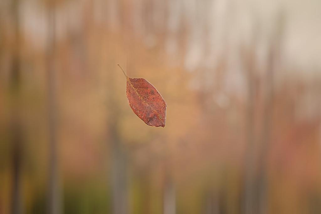 The Fall Dance