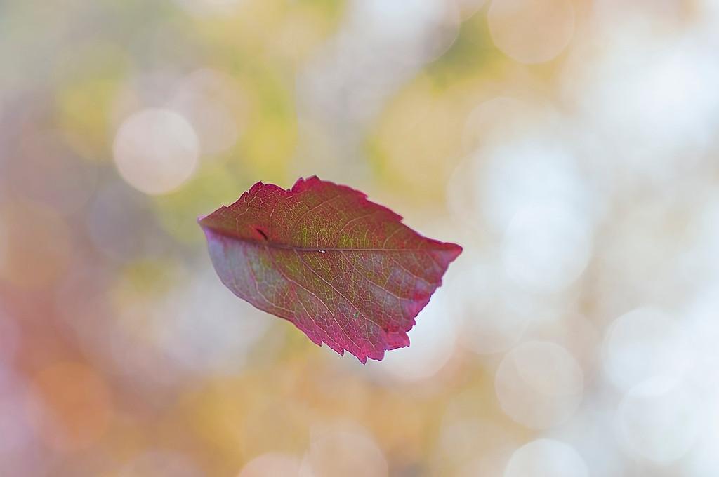 Autumn's Kiss of Color