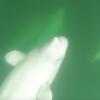 (2227) Belugas