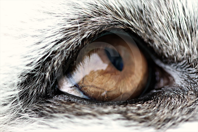 (2254) Through her eyes