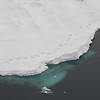 (2109) Polar bear footprints along a sea ice floe