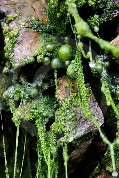 (2372) Natural Flora Art