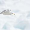 (2128) Baie d'Hudson