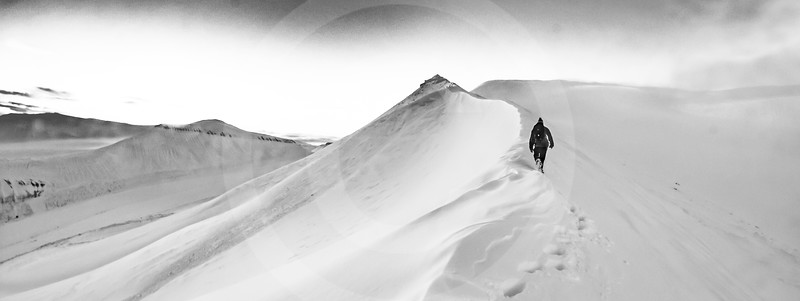 (1034) A lone wanderer in a world of snow