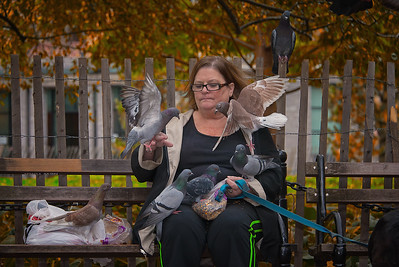 Pigeon Whisperer of Washington Square Park