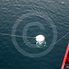 (59) Scientists deploying mooring from the CCGS Amundsen