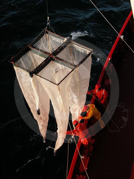 (47) Scientist deploying plankton nets