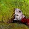 The Parrot Gaze