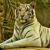 Al, Ain, Zoo, Portraits, by, Vimalnathan