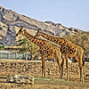 Al Ain Zoo Portraits, United Arab Emirates, Nikon D700, Vimal Nathan Photography
