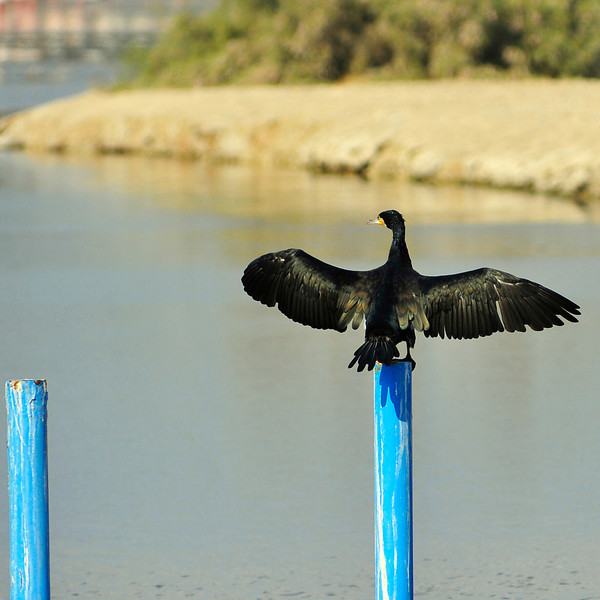 Birds in UAE