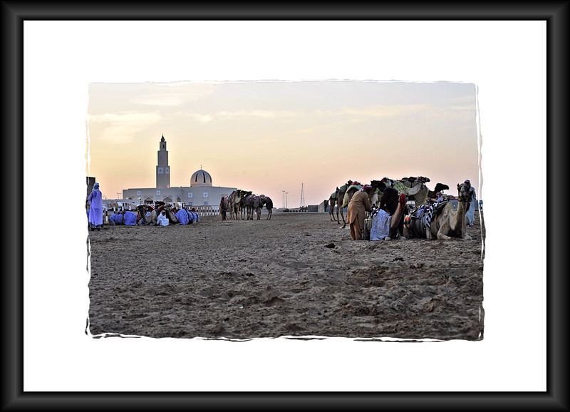 NIKON D700,F/8, ISO-800, Exposure Time: 1/320sec, Photography by Vimalnathan, Al Marmoom Camel race Track, Dubai, UAE.