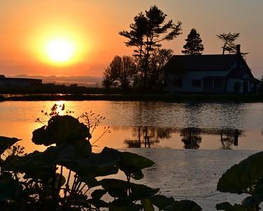 Hokkaido paddy fields