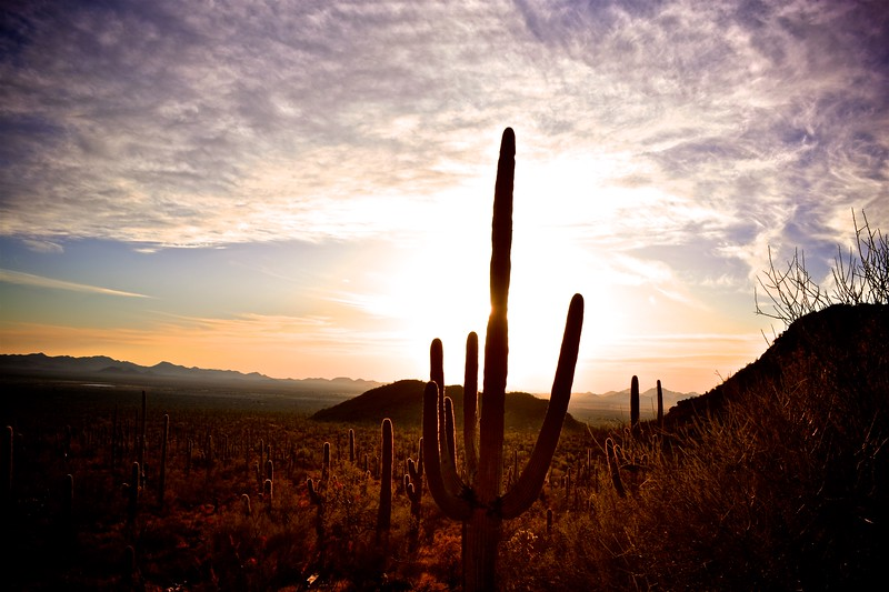 lavender saguaro sky
