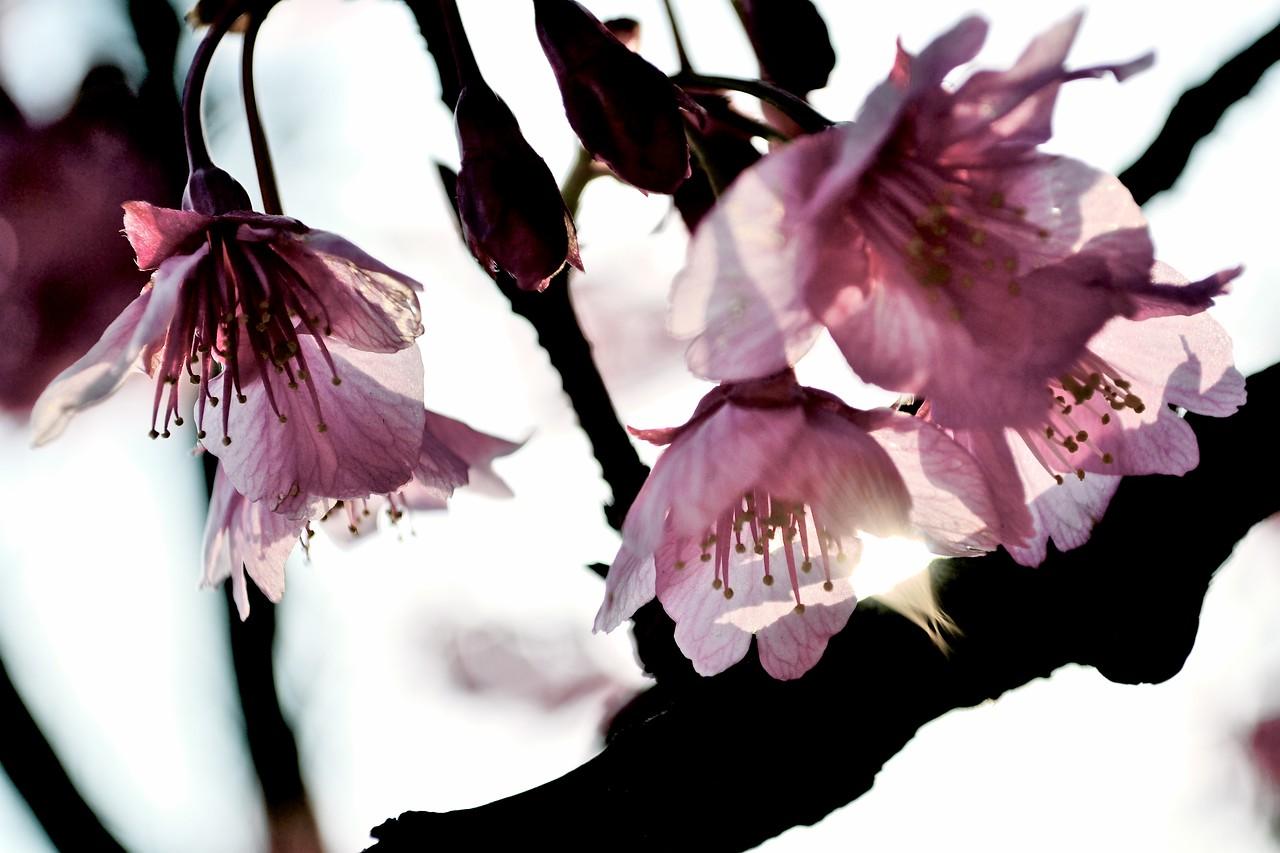 sun kissed petals