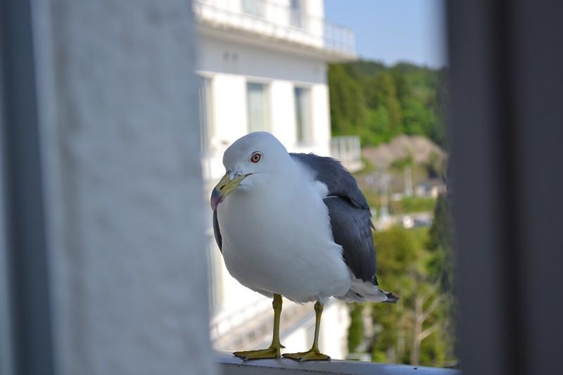 Minamisanriku Seagull