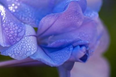 flowers-7124