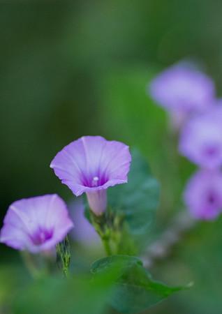 flowers-7206